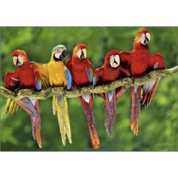 Képeslap, papagájok