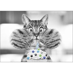 Képeslap, macska
