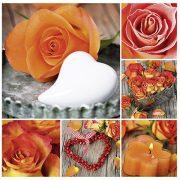 Képeslap, négyzet alakú, narancssárga rózsa