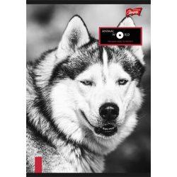 """Füzet, tűzött, A4, kockás, 96 lap, UNIPAP """"Animal World"""""""